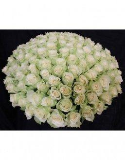 Bouquet of 101 white holland roses | Roses to mother